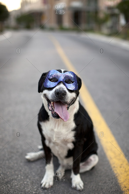 Dog wearing a disguise