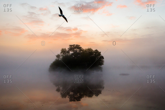 Trees in the middle of a misty pond in Richmond Park, London