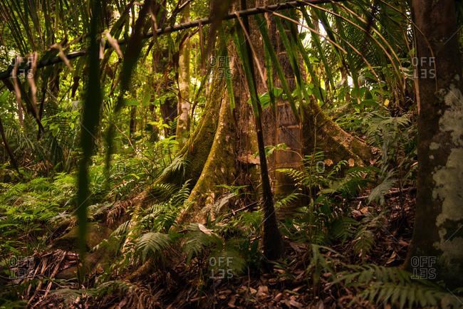 Rainforest floor in Manuel Antonio National Park, Costa Rica