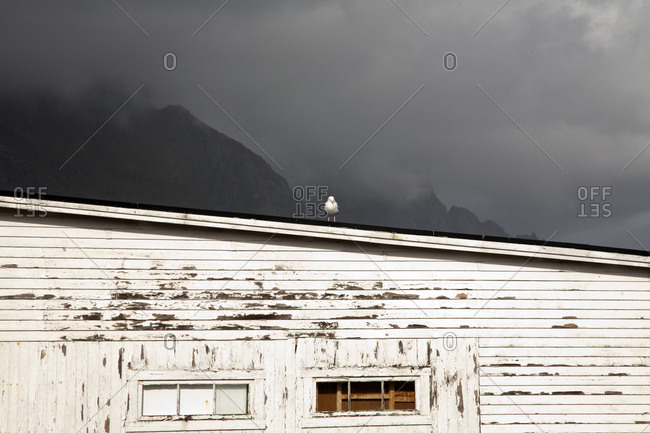 Seagull perched on the roof of a seaside building