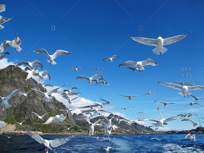 Flock of seagulls flying over a blue sea