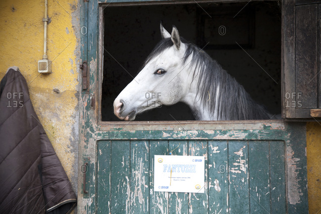 Race horse standing at the door of his stall