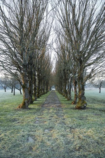 Treelined footpath
