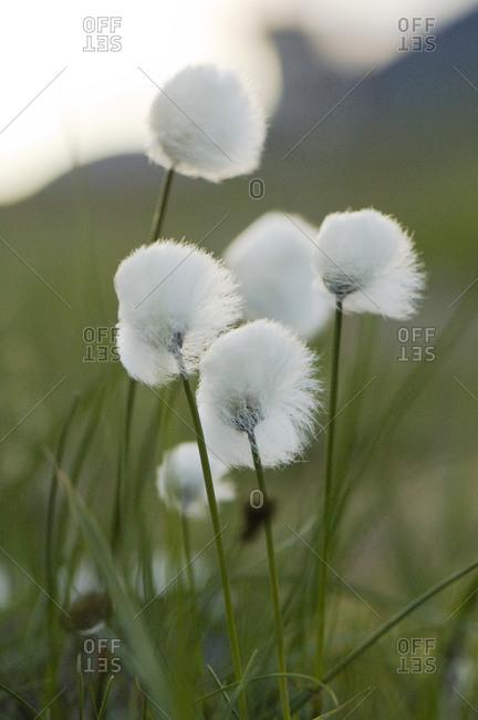 Feathery flowers