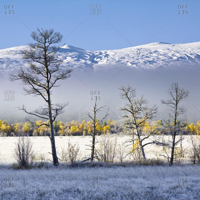 Winter landscape, Rondane National Park
