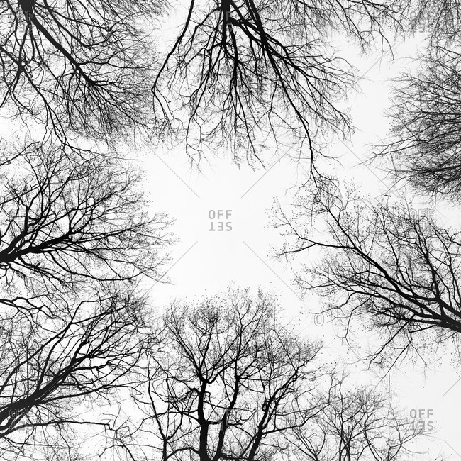 Bare trees, low angle view