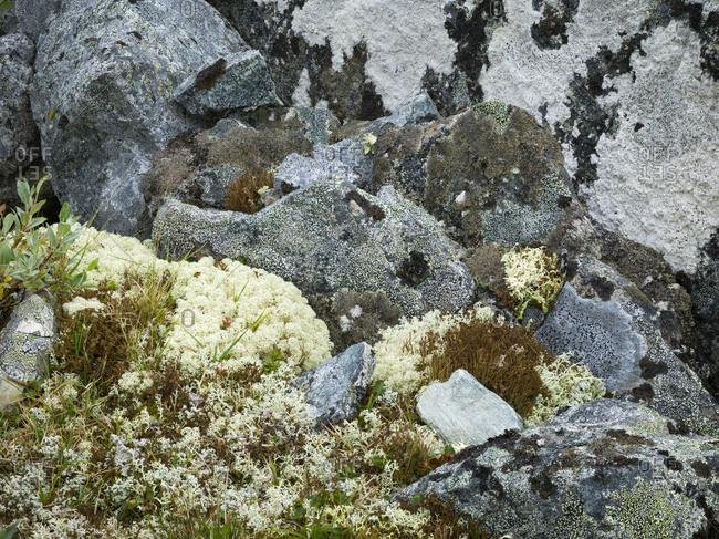 Plants on rocks