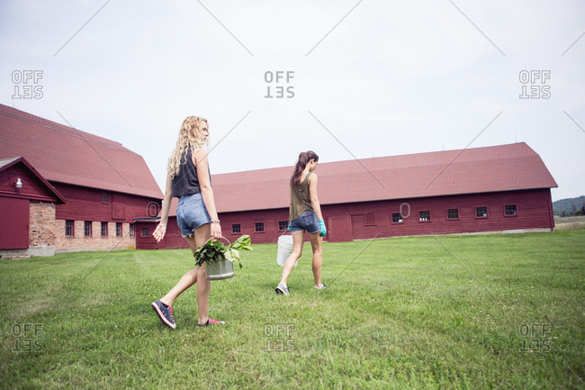 Young women walking across a barnyard carrying buckets