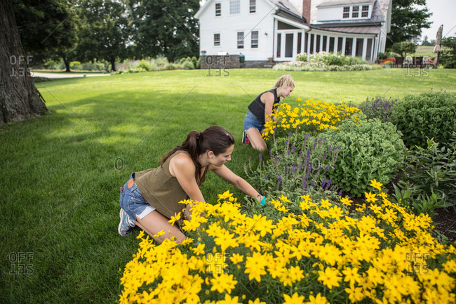 Young women working in a flower garden near a rustic farmhouse