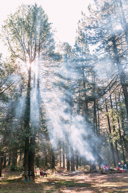 Sunlight streaming through smoky campsite
