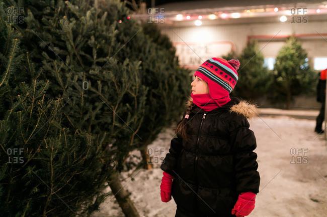 Girl looking at choices at a Christmas tree store