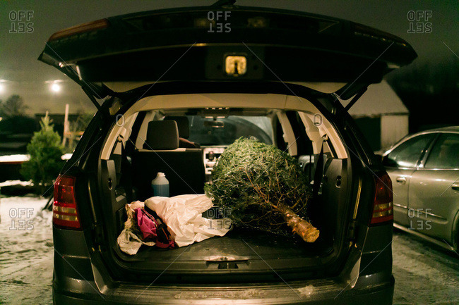 Christmas tree in the back of an SUV