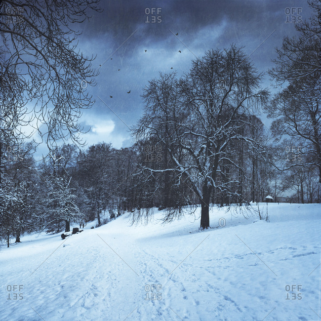 Winter landscape in the afternoon