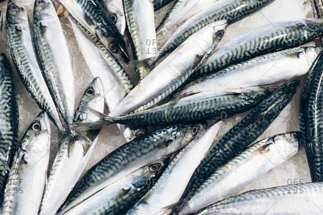 Several whole sardines on ice