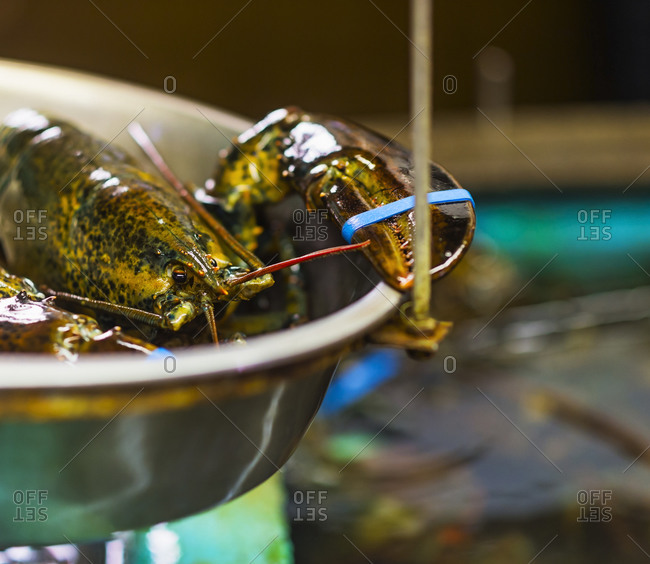 Close up of scale with lobster
