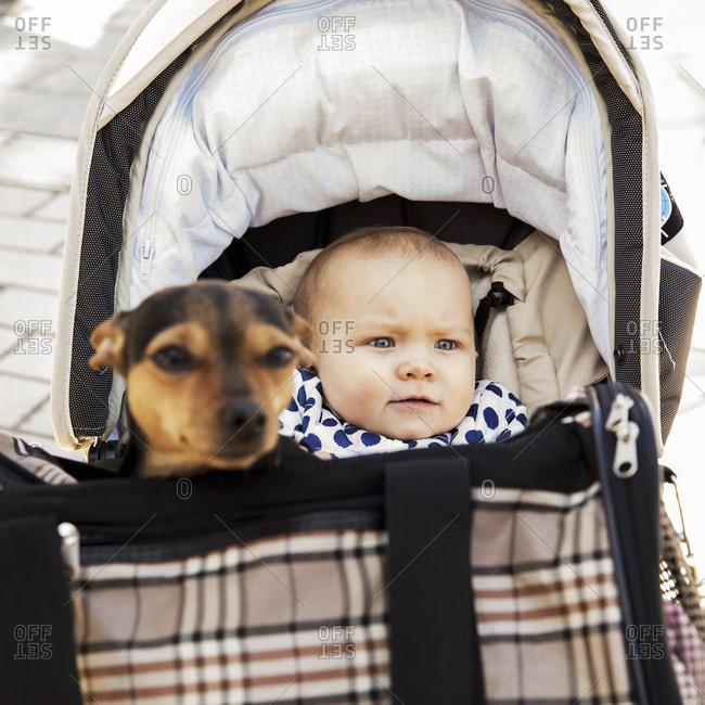 Baby in pram, dog in carrier on background
