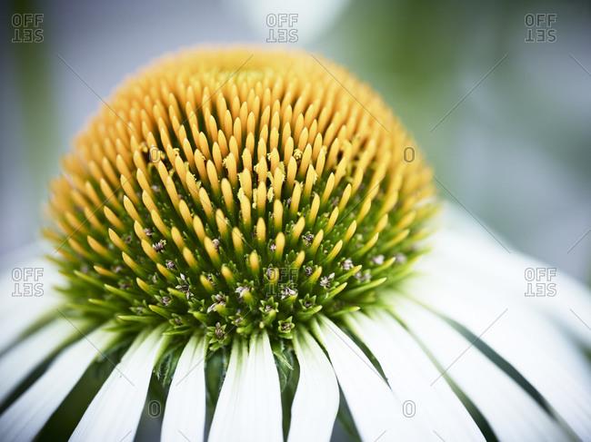 Close up of flower - Offset