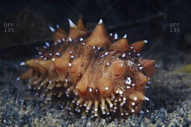 Sea cucumber on the ocean floor