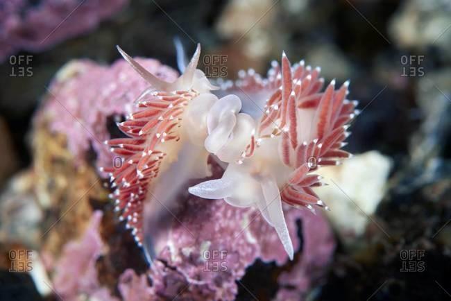 Close up of a sea slug in ocean