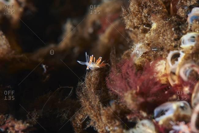 Sea slug among ocean plant