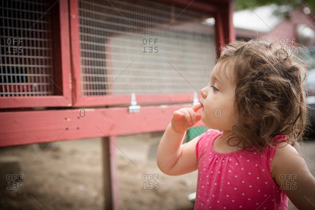 Toddler girl looking in rabbit hutch