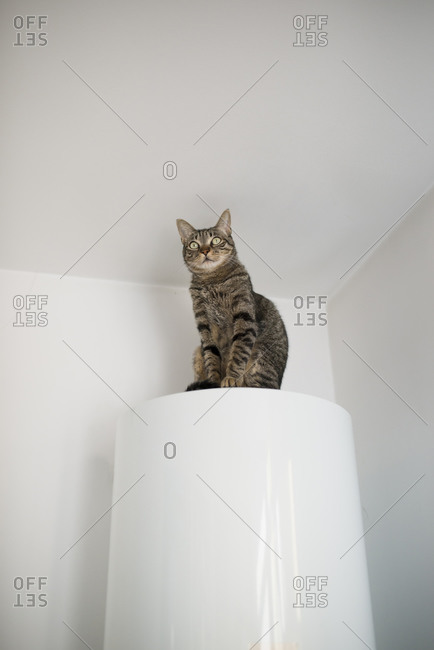 Tabby cat sitting on the top of an electric boiler at home