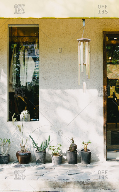 Plants lined up in front of small house