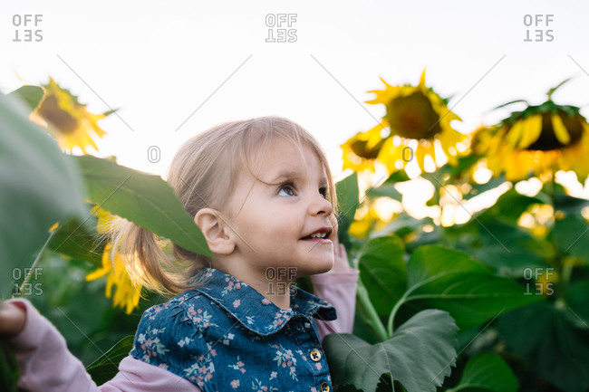 Toddler girl playing in sunflower field