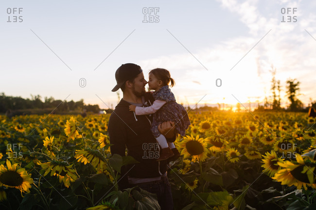 Father and young daughter nose to nose in sunflower field at dusk