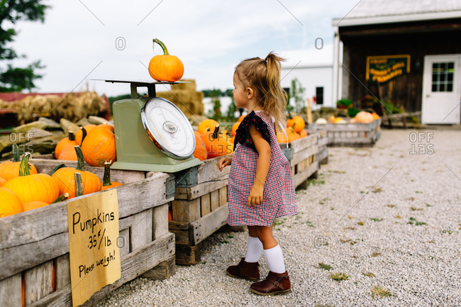 Young girl weighing pumpkin on scale