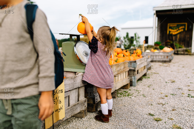 Young girl putting her pumpkin on scale
