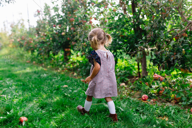 Toddler girl walking past row of trees in apple orchard