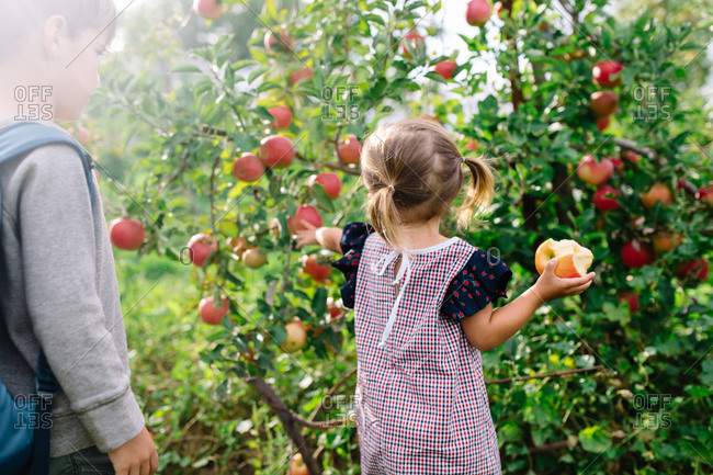 Boy watches his toddler sister reach for an apple off a tree