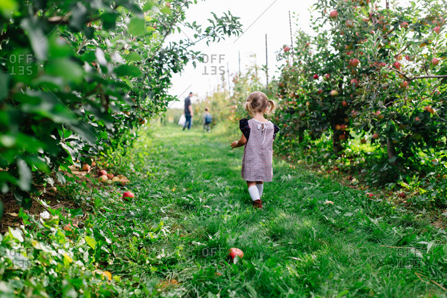 Toddler girl walking in an apple orchard