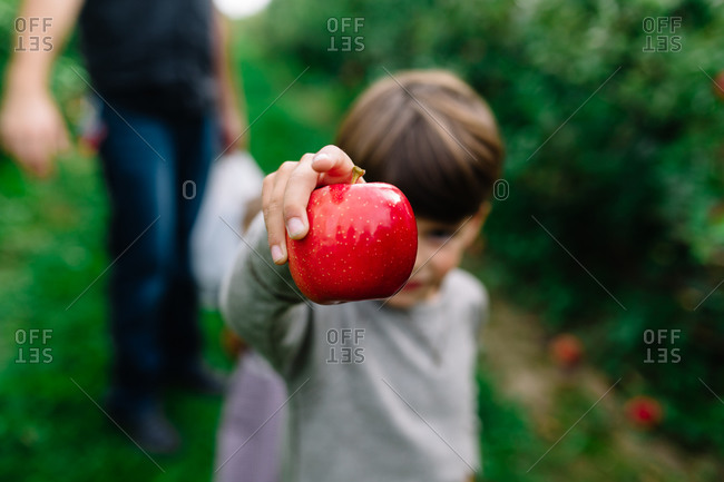 Young boy holding a fresh picked red apple