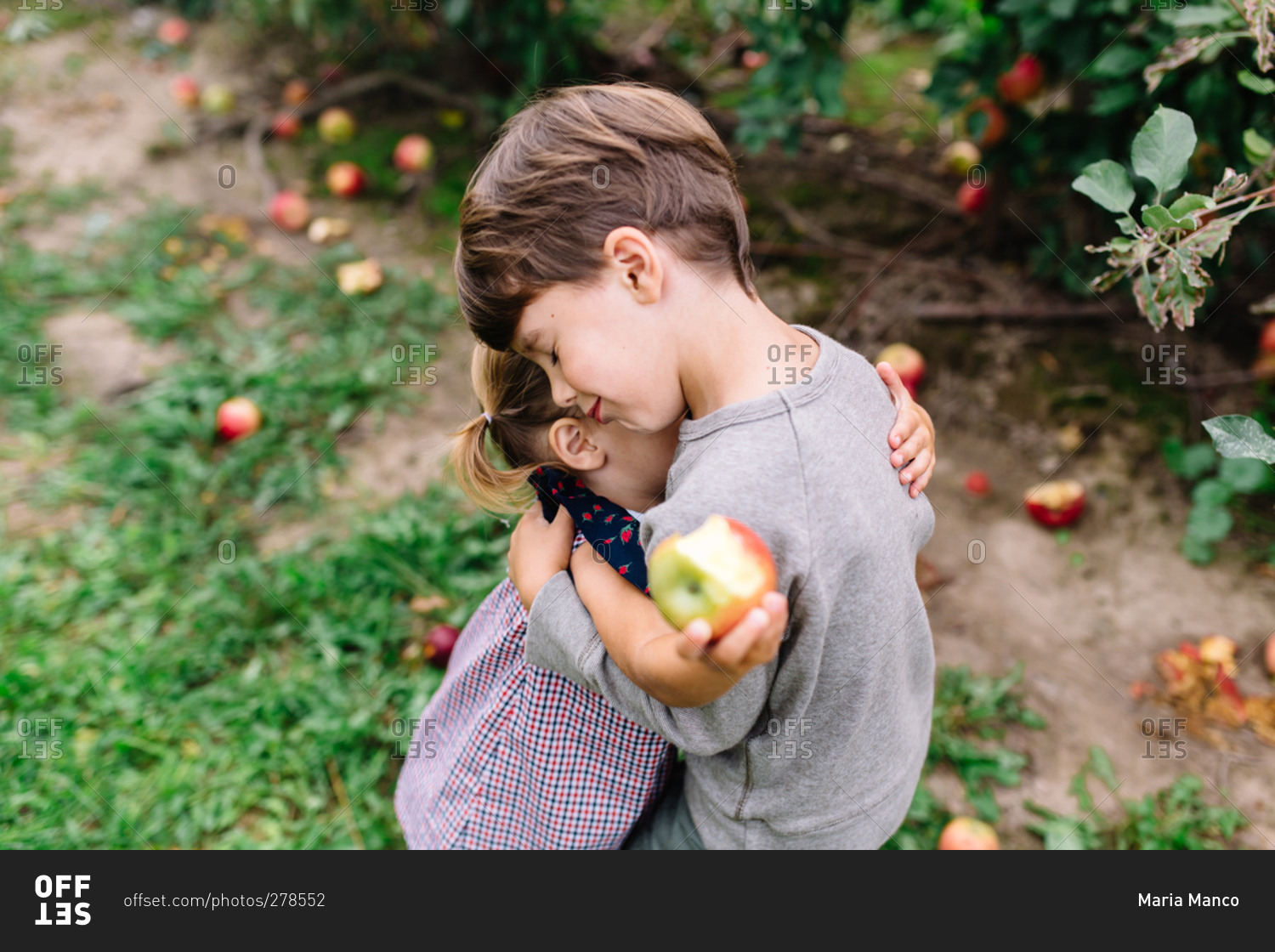 young siblings hugging in an apple orchard stock photo offset
