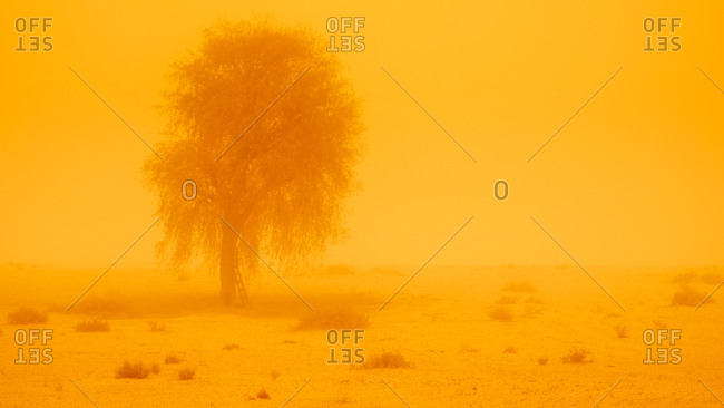 Lonely tree in a sandstorm