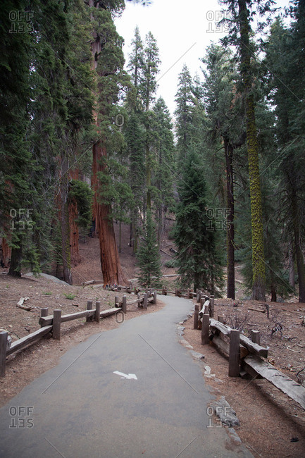 Nature trail in an evergreen forest
