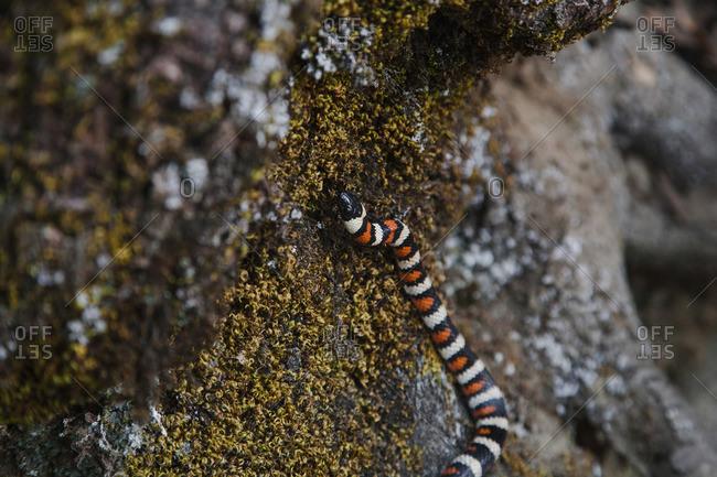 Snake on a mossy rock