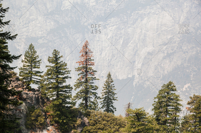 Distant mountainside and evergreen trees