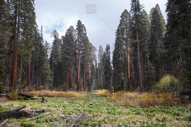 Clearing in an evergreen forest