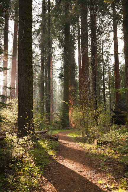 Trees casting shadows across a forest trail