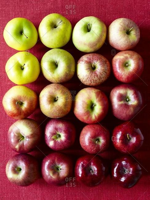 Shades of apples from green to red