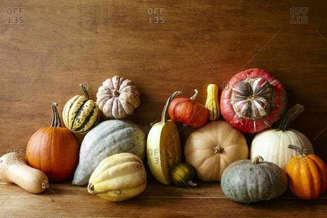 Variety of squash and pumpkins against a wooden wall