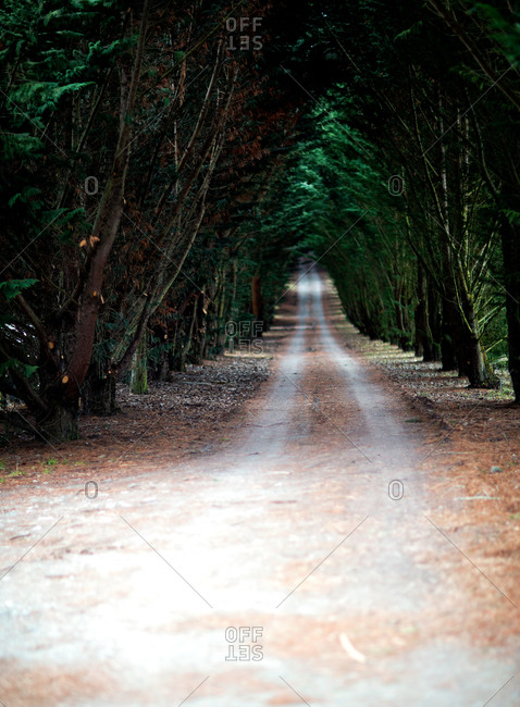 A country path lined with trees