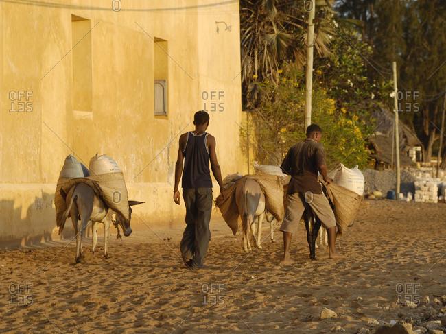 Shela village, Lamu island, Kenya - Men using donkeys to transport goods
