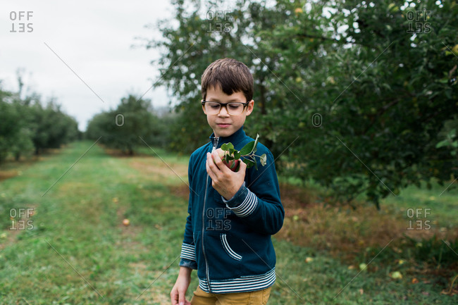 Young boy holding freshly picked apple