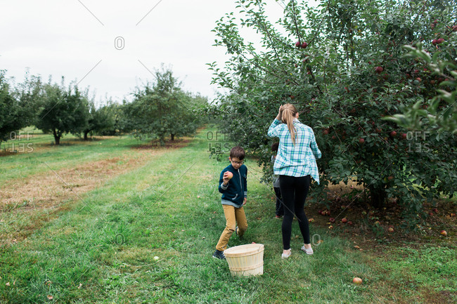 Two children pick apples in an orchard