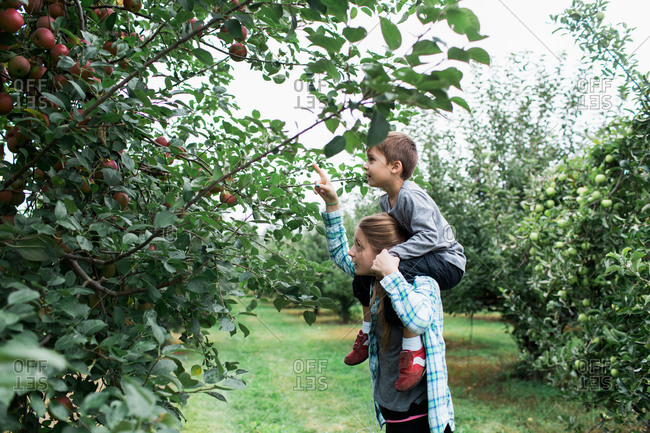 Sister carrying little brother and showing him apple trees