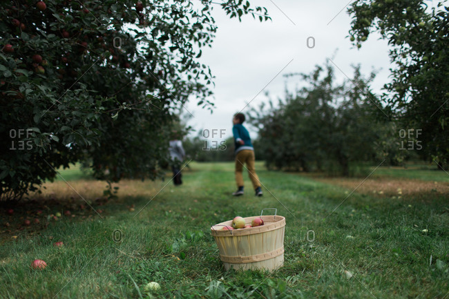 Two boys in an orchard